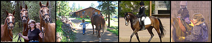 horseback riding, riding lessons, dressage, youth programs, horse welfare